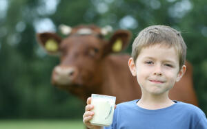 Час Быка-4. За что уважают корову?