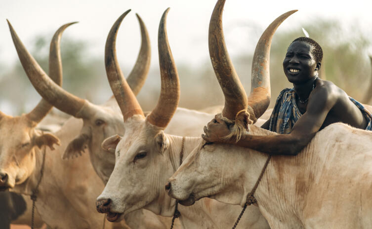 Человек из племени Мундари со своим скотом. Южный Судан