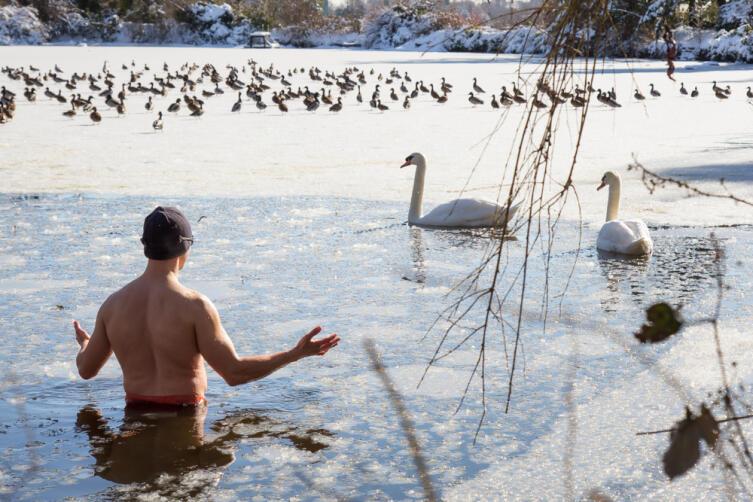 Чем можно кормить уток и лебедей?