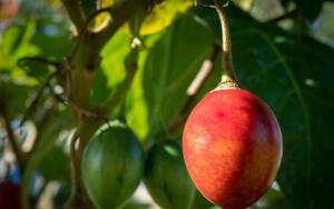 Какие овощи растут на деревьях?