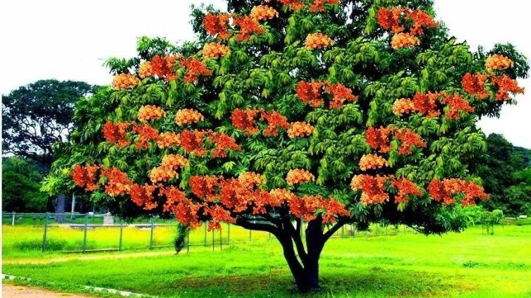 Бог Кама, дерево ашока и Камасутра: что их объединяет?