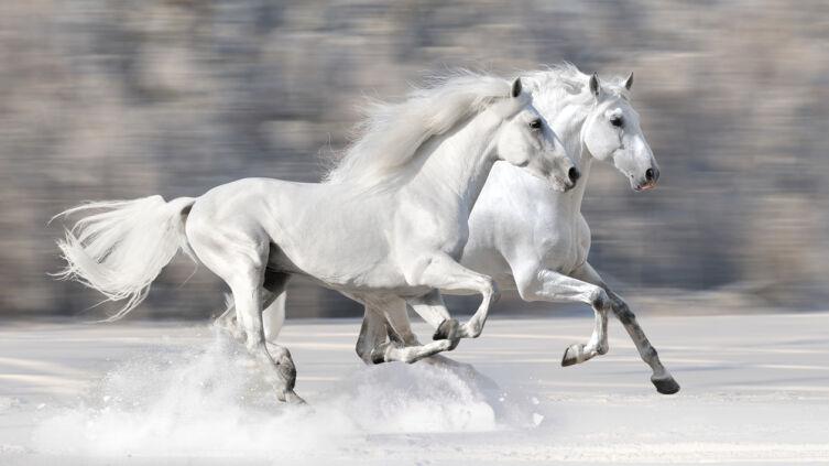 Что символизирует Белый конь в мифологии?
