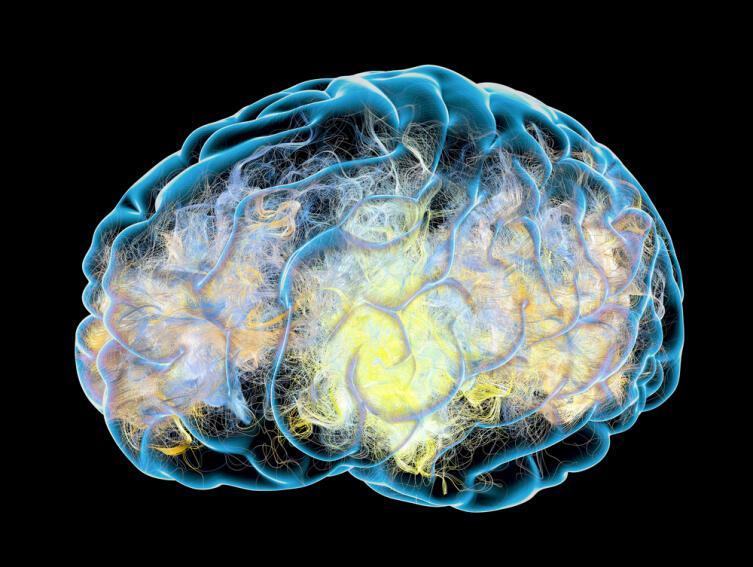 Вырабатывать дофамин может как мозг, так и нервные ганглии, расположенные у стенок органов пищеварения