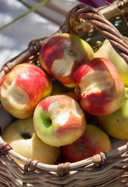 Понадкусала яблок, но так ни одного и не съела - вот тебе незавершенный гештальд