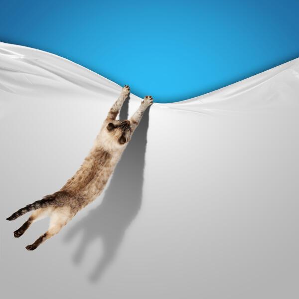 Мечтаете завести сиамского котенка?