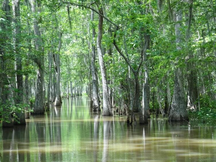 Природа Америки. Чем страшны болота Манчак?