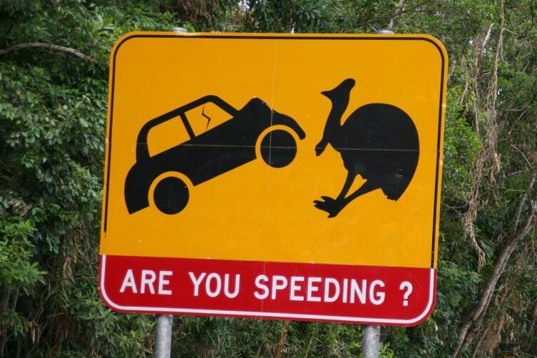 Предупреждение о возможном появлении казуаров на дороге