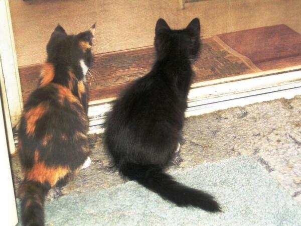 С первого дня знакомства котята везде вместе