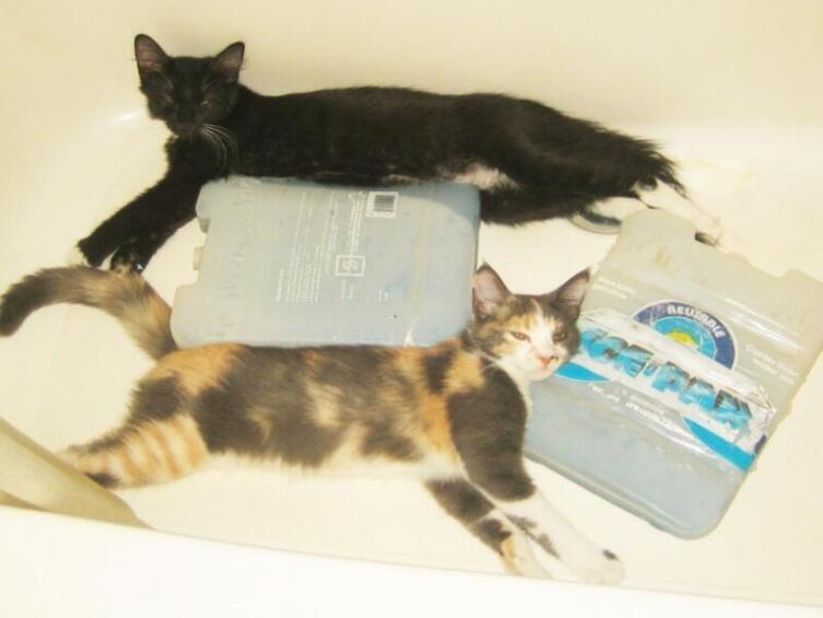 Пережить жару можно в мокрой ванной рядом с замороженными контейнерами