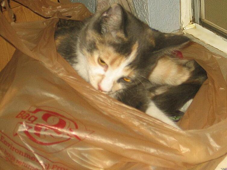 Соня опять «упаковалась» в пластиковый пакет
