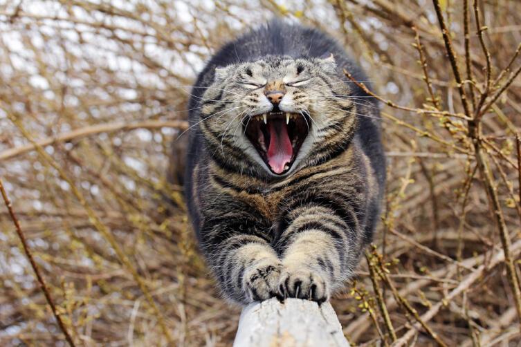 Как без насилия приучить кошку к горшку?
