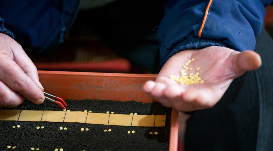Что не помешает знать о семенах и рассаде?