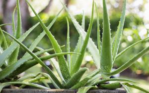 Какие комнатные растения опасны для домашних питомцев?