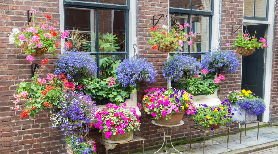 Каким растением украсить свой дом, чтобы вскоре разбогатеть?