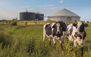 По какому принципу работают биогазовые установки и в чем их польза?
