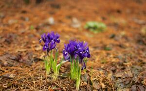 Что надо успеть сделать в апреле на огороде?