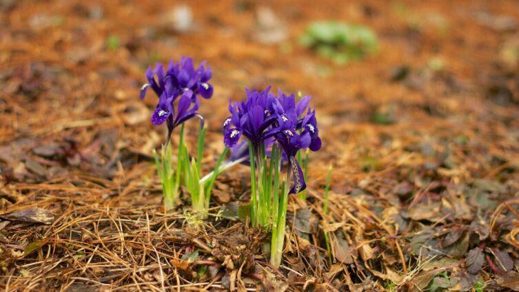 Что надо успеть сделать в апреле на огороде