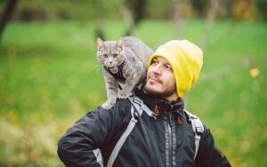Как воспитывать и дрессировать кошку?