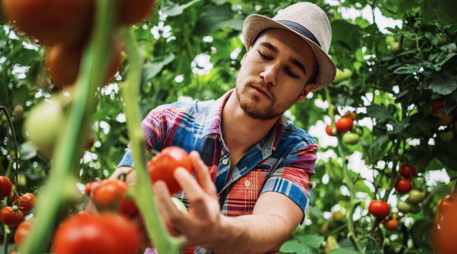 Как выращивать растения в парнике?