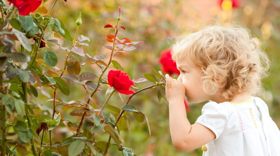 Талисман на удачу. Как расцветает Роза?
