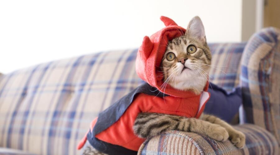 Как защитить новый диван от кошачьих когтей?