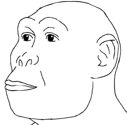 Homo habilis — человек умелый