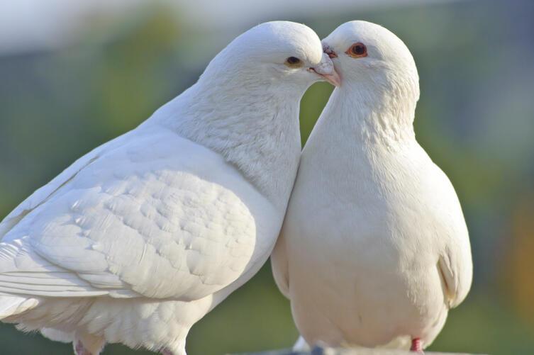 Для активации подойдут и изображения пары голубей или журавлей
