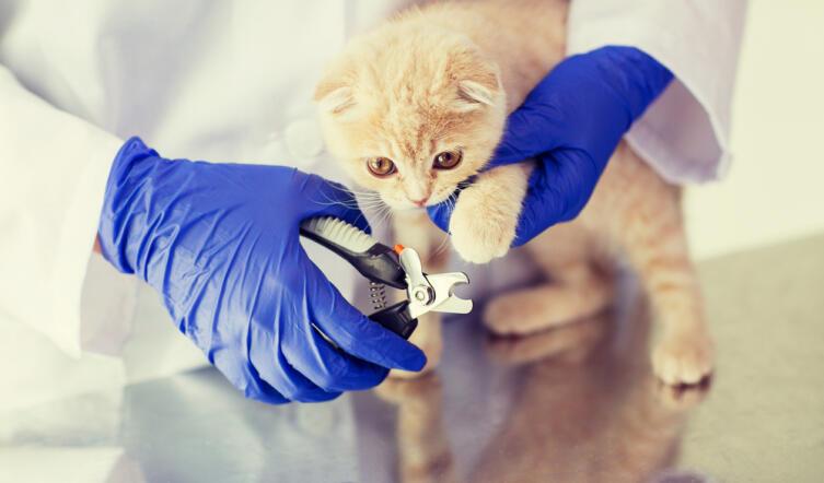 Котятам до полугода лучше не приклеивать антицарапки