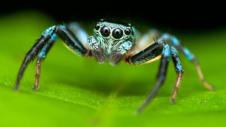 Почему пауки не являются насекомыми?