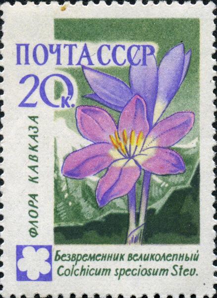 Марка СССР, выпущенной в серии «Флора Кавказа»