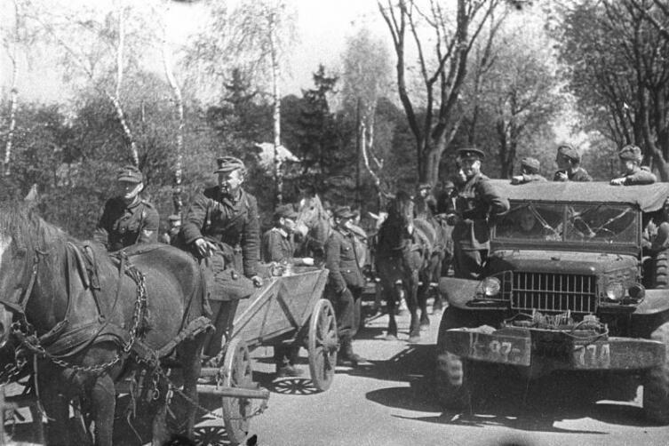 Солдаты вермахта с обозами сдаются в плен на косе Фрише-Нерунг войскам советского 3-го Белорусского фронта