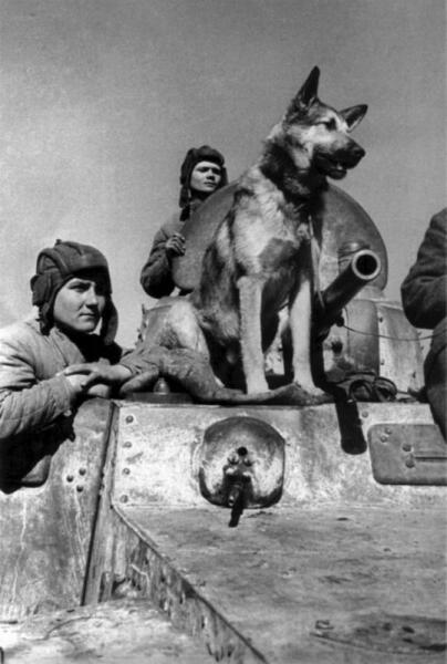 Экипаж бронеавтомобиля БА-10 с овчаркой Джульбарс