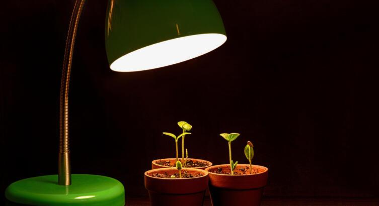 Если не можете обеспечить росткам достаточно света, не торопитесь с рассадой