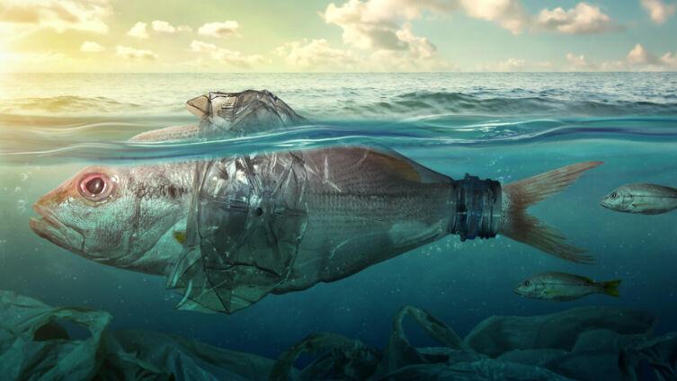 Куда уходит пластик из мирового океана?