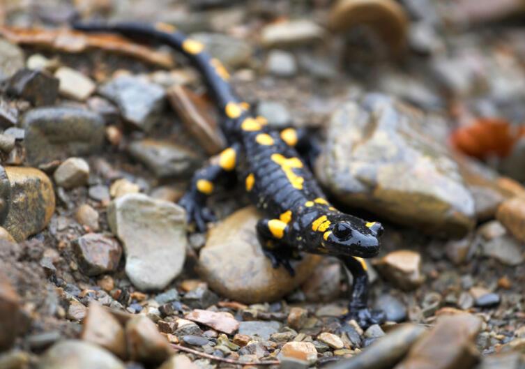 Как содержать экзотическое животное в домашних условиях?