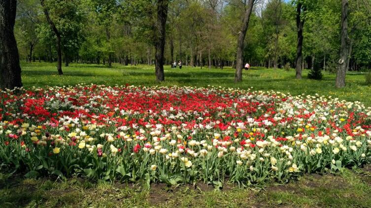 Где можно увидеть тюльпаны, как в Нидерландах?5