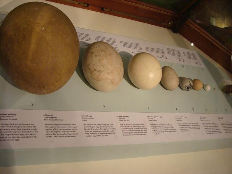 Оологи занимаются коллекционированием яиц