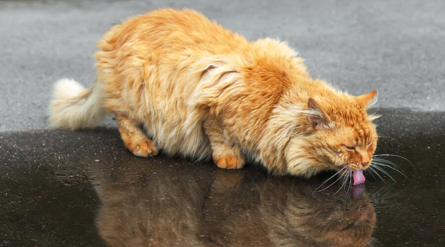 Как кот Рыжик ездил на дачу?