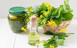 Лекарственные растения: чем полезен чистотел?