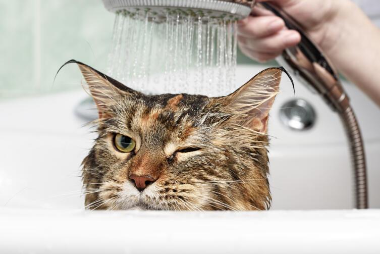 Как правильно и быстро помыть кота или другое домашнее животное?