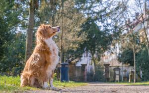 Как живут бездомные собаки-доставаки?