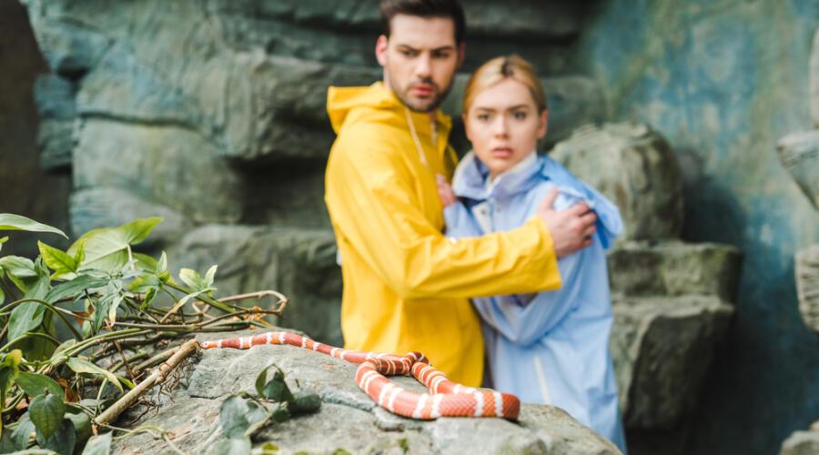 Как избежать укуса змеи во время отдыха на природе?