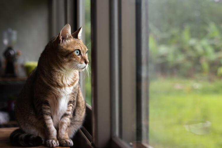 Кошка способна определить в доме позитивные и негативные места
