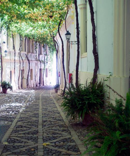 Улица, обвитая виноградом