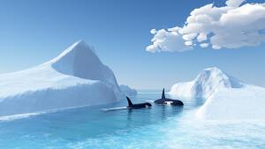 Кому принадлежит Антарктида?