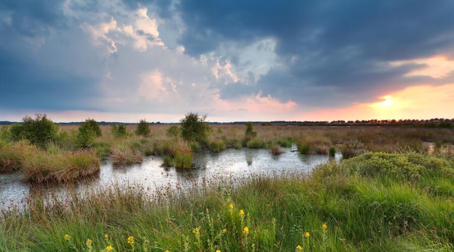 Что растёт на болоте?