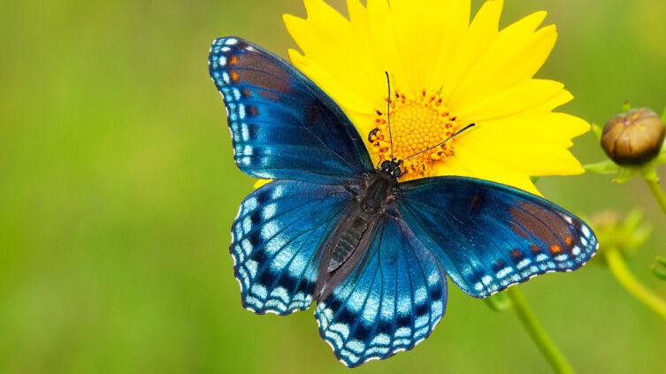 Бабочки: чем питаются эти милые создания?