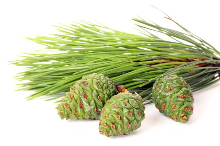 Чем полезно варенье из сосновых шишек и как его приготовить?
