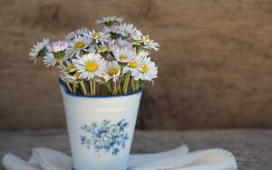 Какие цветы дарить разным знакам Зодиака?