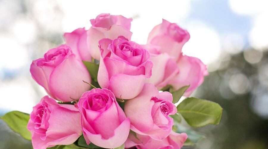 Какие розы выбрать — привитые или корнесобственные?